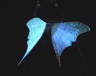 blue-twinkle-moth
