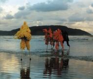 birds-brazilsea