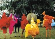 birds-in-park-in-brazil
