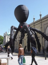 spiders-brighton-test