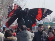 butterfly-red-admiral-beijing